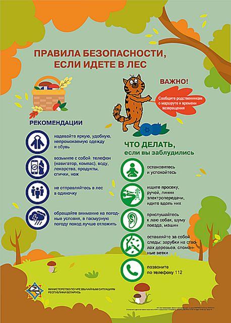 Памятка «Правила безопасности, если идёте в лес»