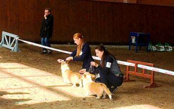 На республиканской выставке собак