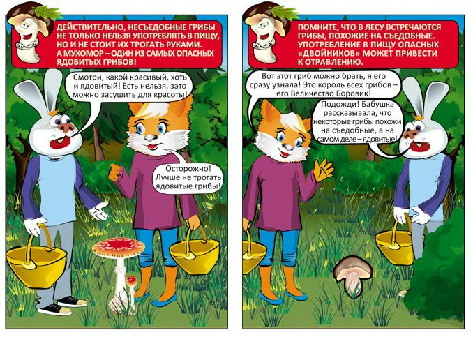 Правила сбора дикорастущих грибов